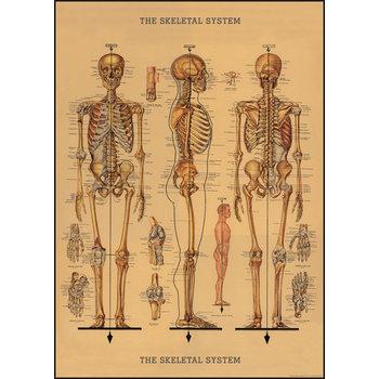 CAVALLINI Poster 50x70cm Vintage Squelette