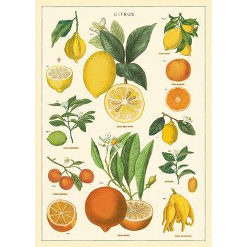 CAVALLINI Poster 50x70cm Vintage Citrons