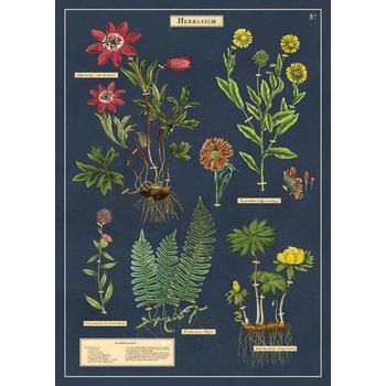 CAVALLINI Poster 50x70cm Vintage Herbarium