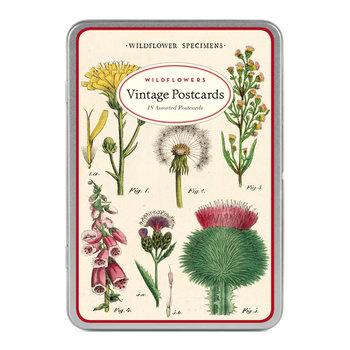 CAVALLINI Set de 18 Cartes Postales Vintage Fleurs Sauvages