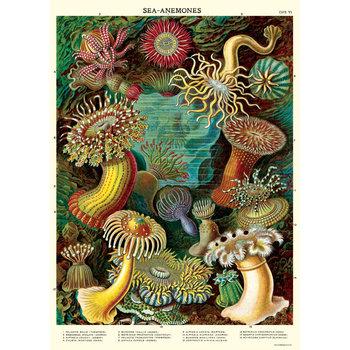 CAVALLINI Poster 50x70cmVintage Anemone de mer