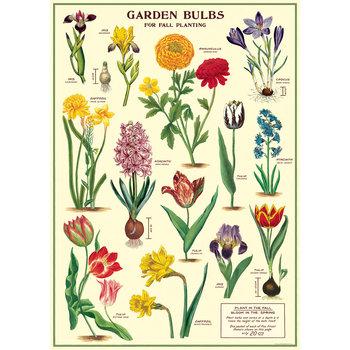 CAVALLINI Poster 50x70cmVintage Bulbes de Jardin
