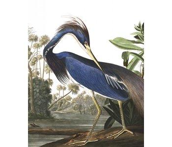 KEK Amsterdam Baggrundspanel Louisiana Heron