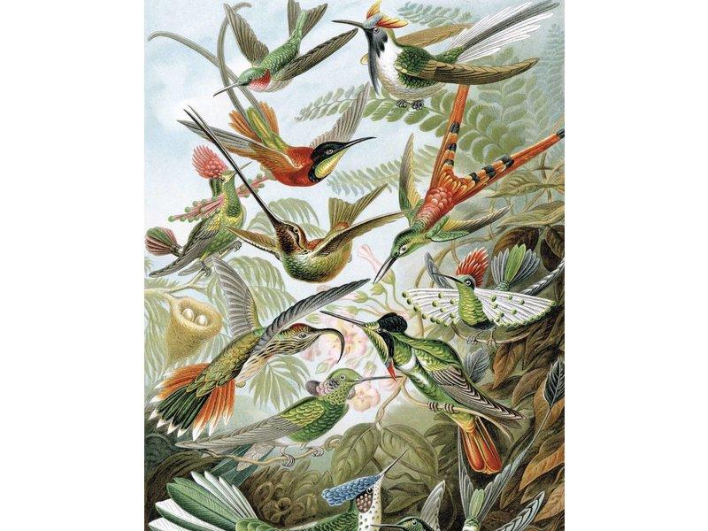 KEK Amsterdam Bakgrundspanel Exotiska fåglar