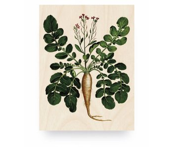 KEK Amsterdam Print on wood Botanical Root Plant