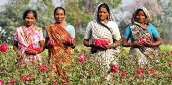 Organic India gelooft niet alleen in een betere Aarde, maar werkt er ook aan