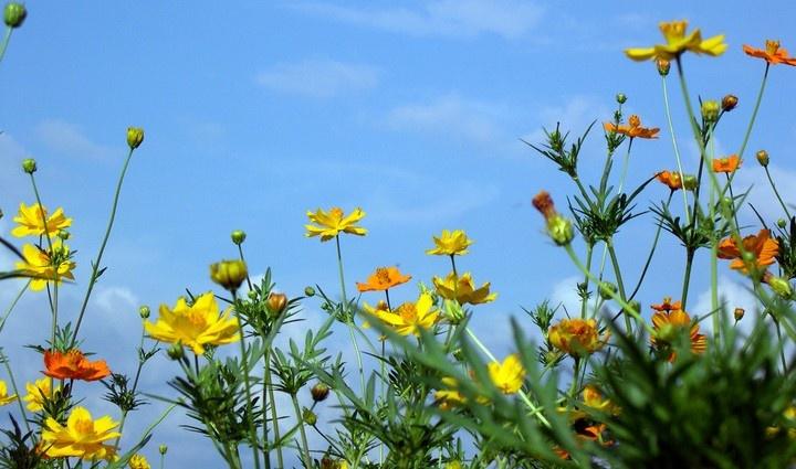 Jaaaa, het is weer lente, volop genieten, maar niet voor iedereen…