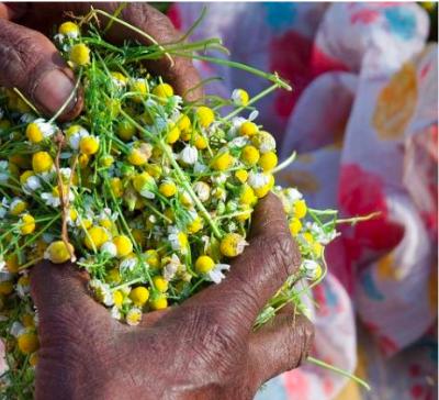 Organic India krijgt LEED Platinum Certificaat voor nieuwe fabriek