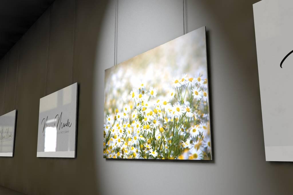 Werbe-/Produktfotograf Marcel Mende Blumenwiesenbild