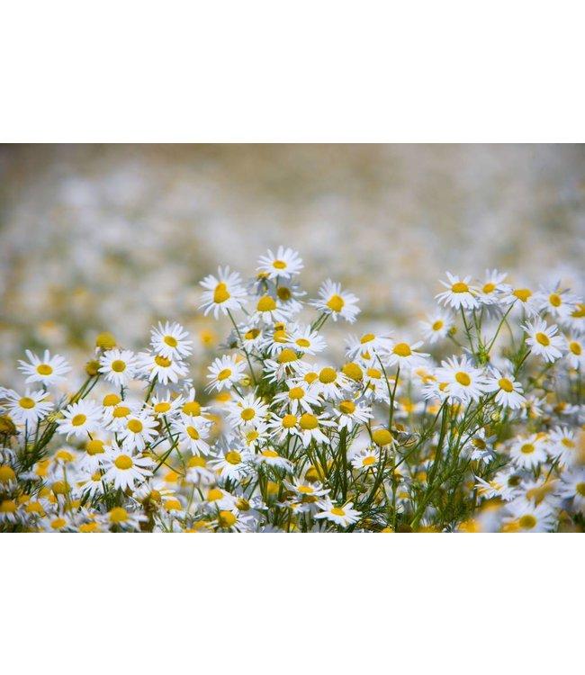 Werbe-/Produktfotograf Marcel Mende Blumenwiese