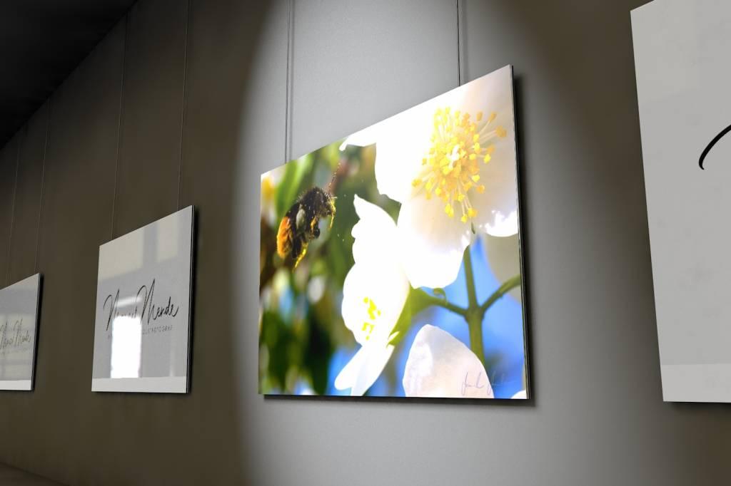 Werbe-/Produktfotograf Marcel Mende Anflug einer Hummel auf eine Blüte