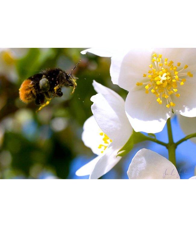 Werbe-/Produktfotograf Marcel Mende Hummel an Blume