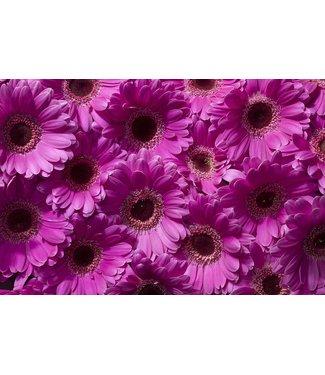 Werbe-/Produktfotograf Marcel Mende Pink Flower
