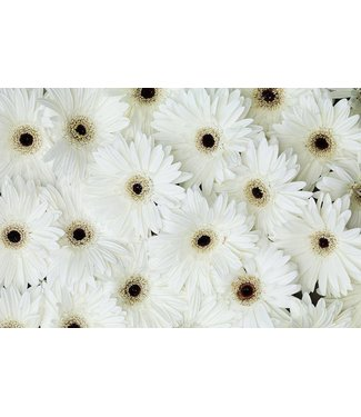 Werbe-/Produktfotograf Marcel Mende weiße Blüten