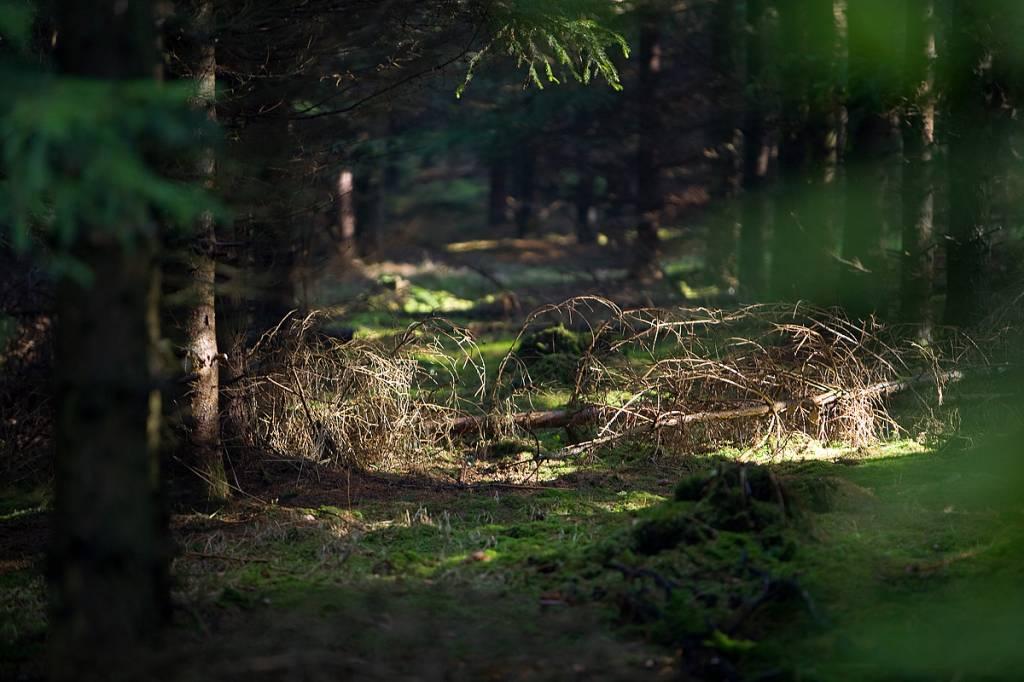 Werbe-/Produktfotograf Marcel Mende Waldlichtung