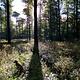 Werbe-/Produktfotograf Marcel Mende Hund im Wald