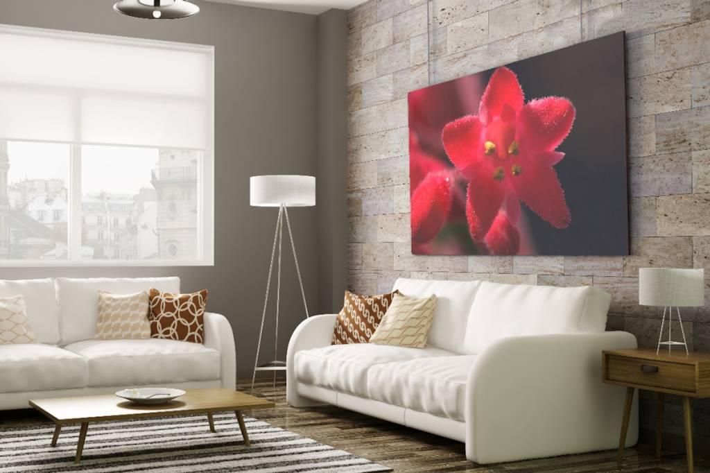 Werbe-/Produktfotograf Marcel Mende rote Blüte
