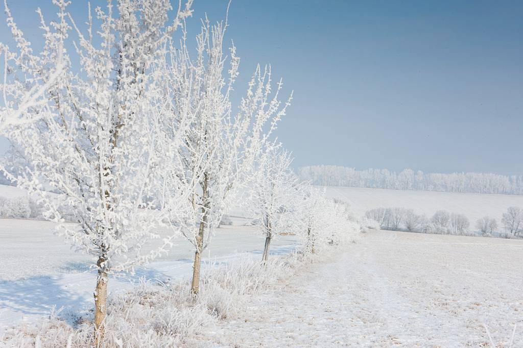 Werbe-/Produktfotograf Marcel Mende Bäume im Winter