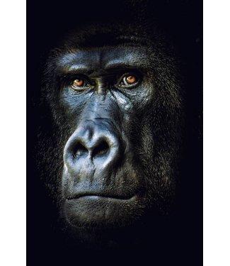 Werbe-/Produktfotograf Marcel Mende Gorilla