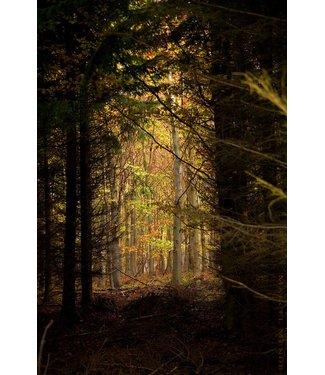 Werbe-/Produktfotograf Marcel Mende Waldlichtung düster