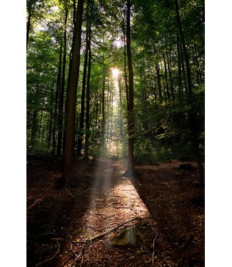 Werbe-/Produktfotograf Marcel Mende Lichtschein im Wald