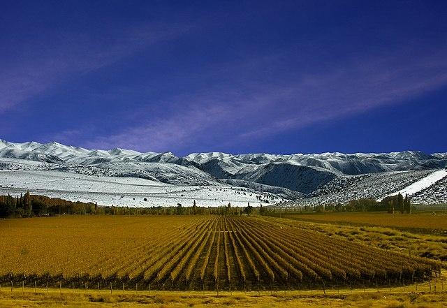 Wijngaarden van Mendoza - Bron: Автор