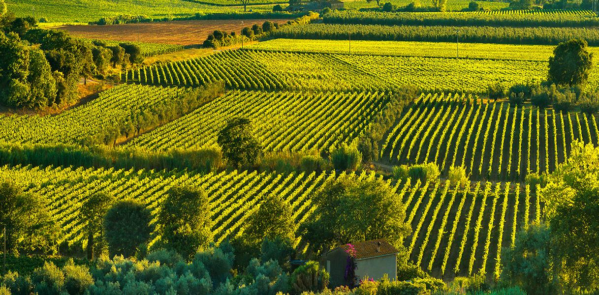 Prachtig zicht op Bolgheri en Castagneto wijngaarden