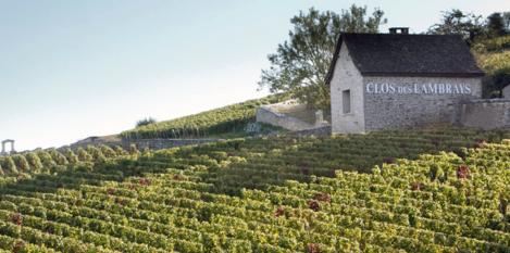 Wat kost een wijngaard in Frankrijk