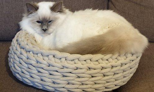 Luieren jullie katten ook altijd? Die van ons wel, en vanaf nu in een Lazy kattenmand!