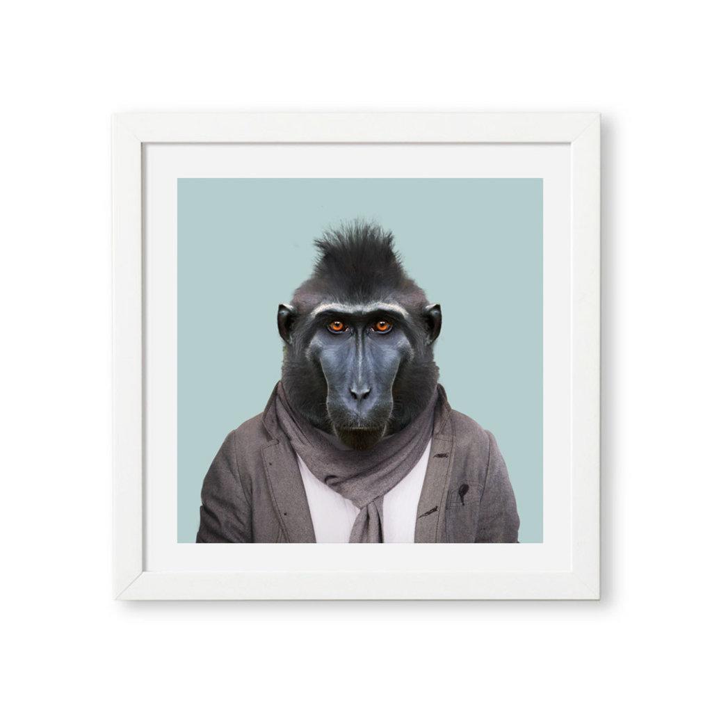 Yago Partal Ingelijste Poster | Celebes Crested Macaque