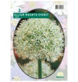 Sierui Allium Mount Everest