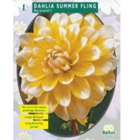 Dahlia Summer Fling