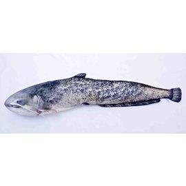 Gaby The Catfish