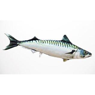 The Atlantic Mackerel  (60 cm)