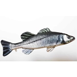Gaby The European Sea Bass  (70 cm)