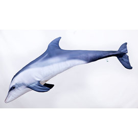 The Bottlenose Dolphin - grey