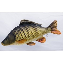 Gaby The Common Carp