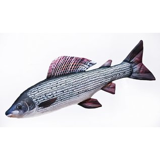 The Grayling  (65 cm)