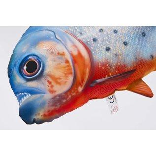 Gaby The Red- bellied Piranha  (47 cm)