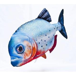 The Red- bellied Piranha  (47 cm)