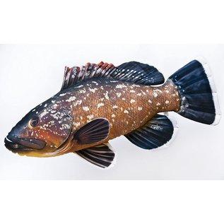 Gaby The Dusky grouper  (100 cm)