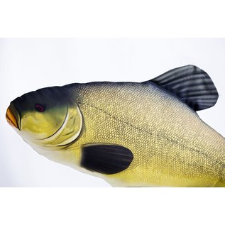 The Tench  (60 cm)