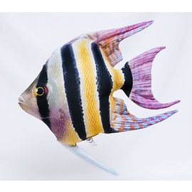 Gaby The Freshwater Angelfish  (51 cm)