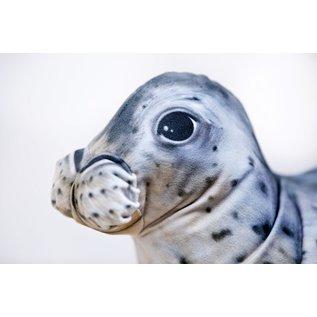 Gaby The Grey Seal