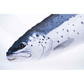 Gaby The Sea Trout   (110 cm)