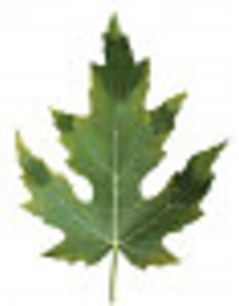 Canna Canna Mono Phosphor P20% 1l