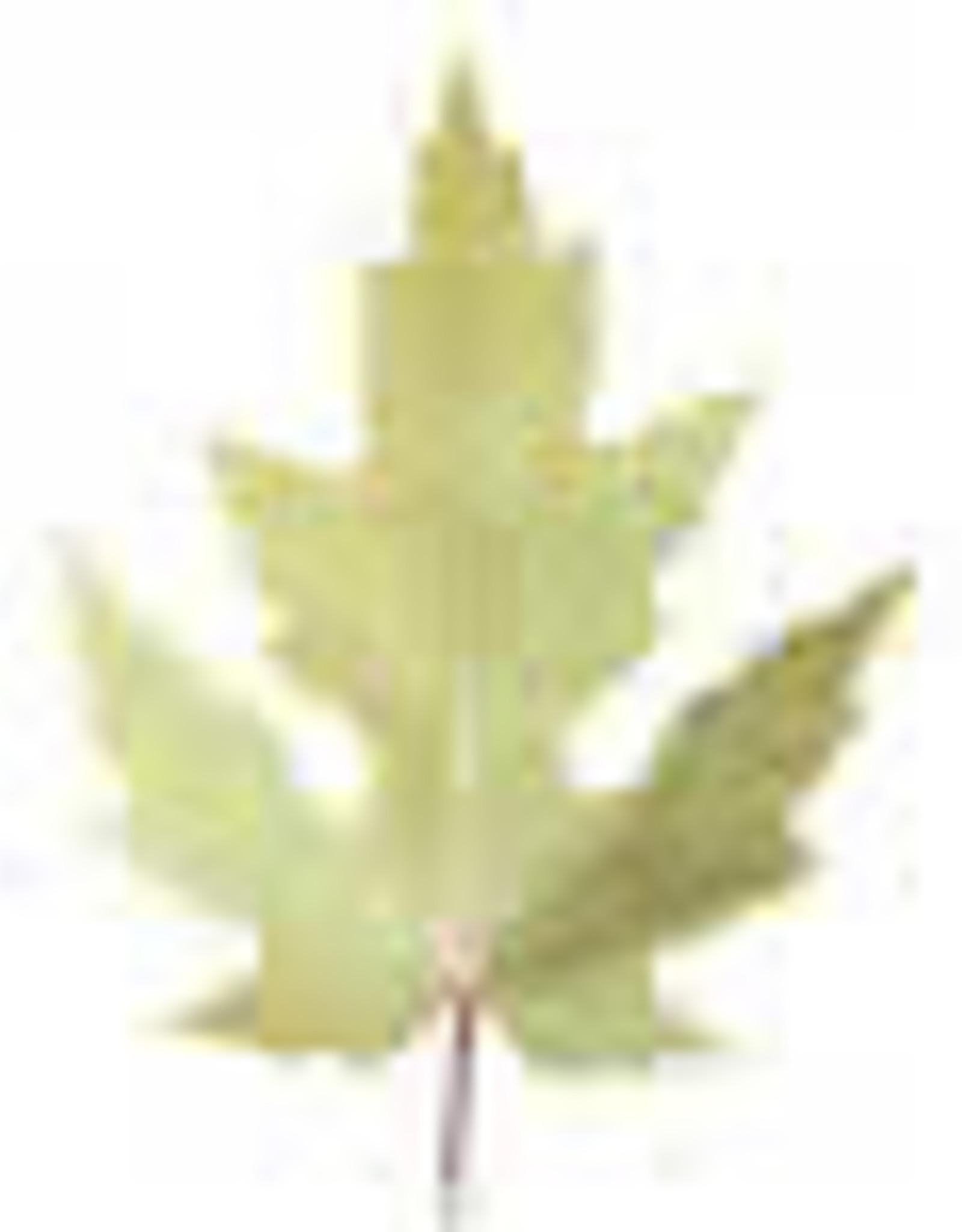 Canna Canna Mono N Stickstoff 20% 1l