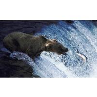 Grizzly  Grizzly Lachsöl