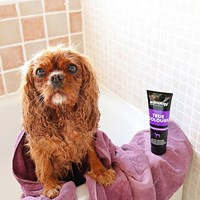 Animology Animology True Colours Shampoo