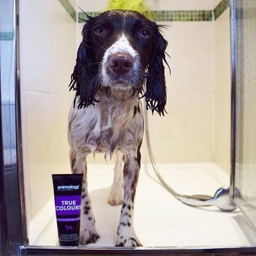 Animology Animology True Colours Dog Shampoo